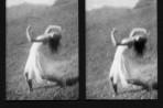 stereoscopic #4