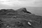 West Ireland #11